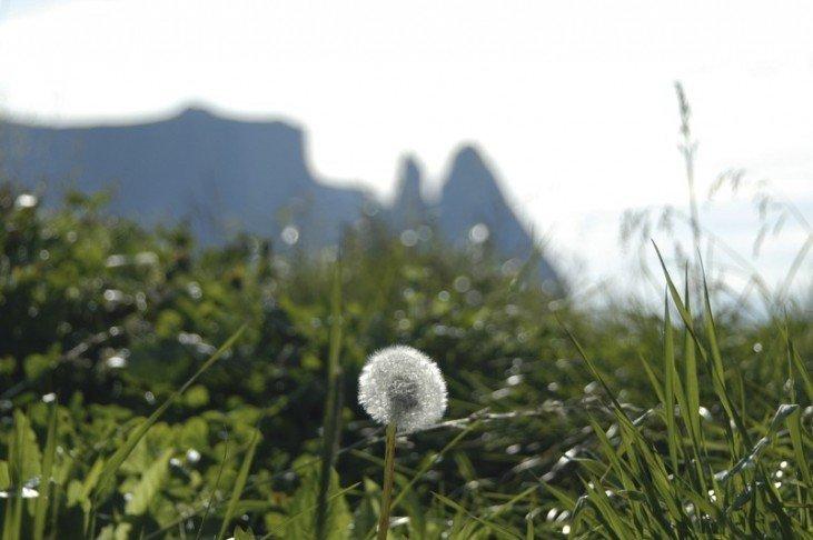 Gite ed escursioni sull'Alpe di Siusi – Dolomiti / Alto Adige